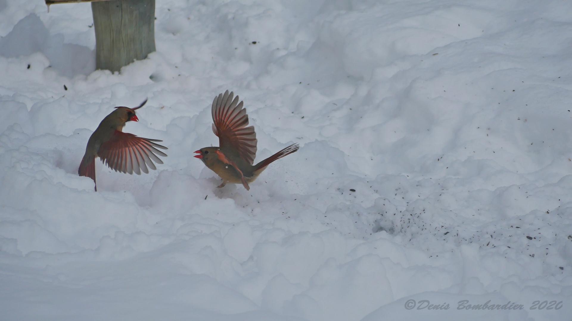 Le tango du cardinal